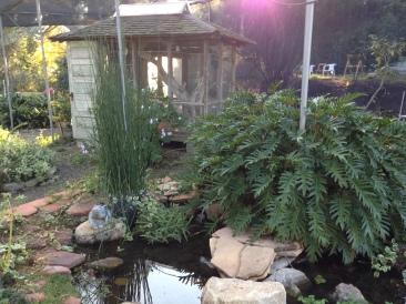 Succulent Garden Pond.