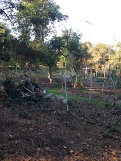 Food Forest